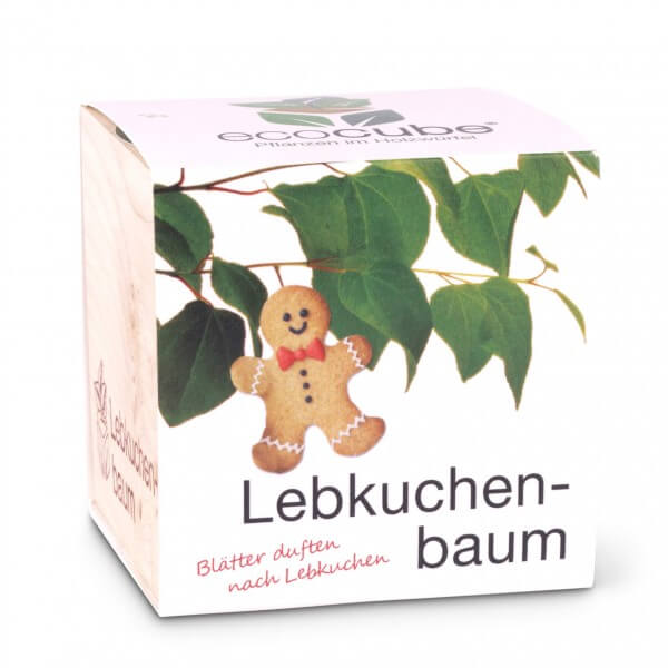 Pflanzwürfel 'Lebkuchenbaum'